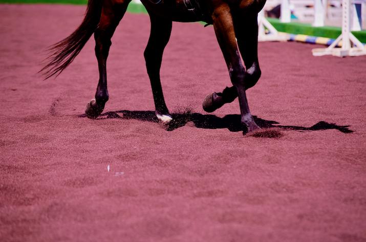 A FieraCavalli il benessere del cavallo galoppa su gomma riciclata