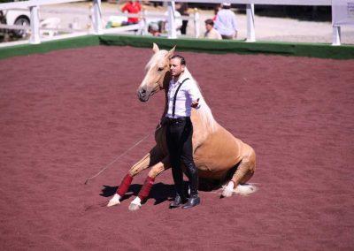 Equitazione Orvieto