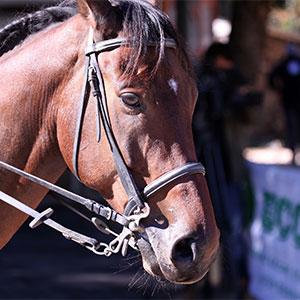 Innovazione, benessere animale ed economia circolare: a Orvieto la prima struttura per cavalli interamente in gomma riciclata