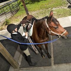 Il primo campo lavoro per l'equitazione con Pneumatici Fuori Uso