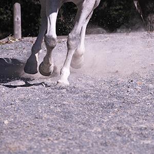 Il benessere del cavallo corre su gomma riciclata da Pneumatici Fuori Uso