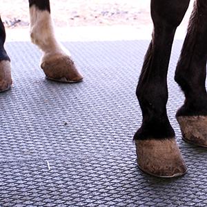 A Fiera Cavalli: la salute del cavallo sulle nuove pavimentazioni