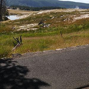 Pneumatici riciclati per rivestire il nuovo percorso pedonale nel Parco nazionale di Yellowstone