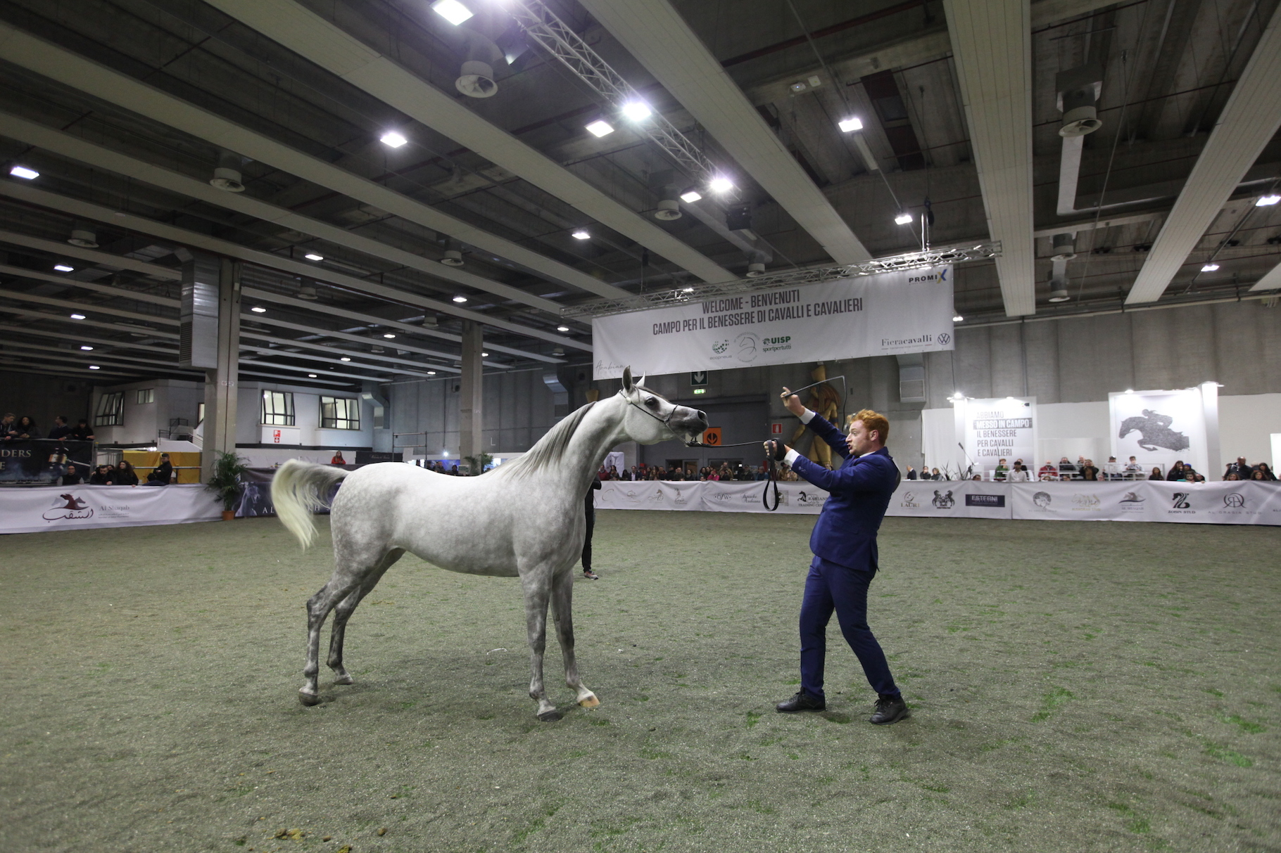 Arabian Horse Show