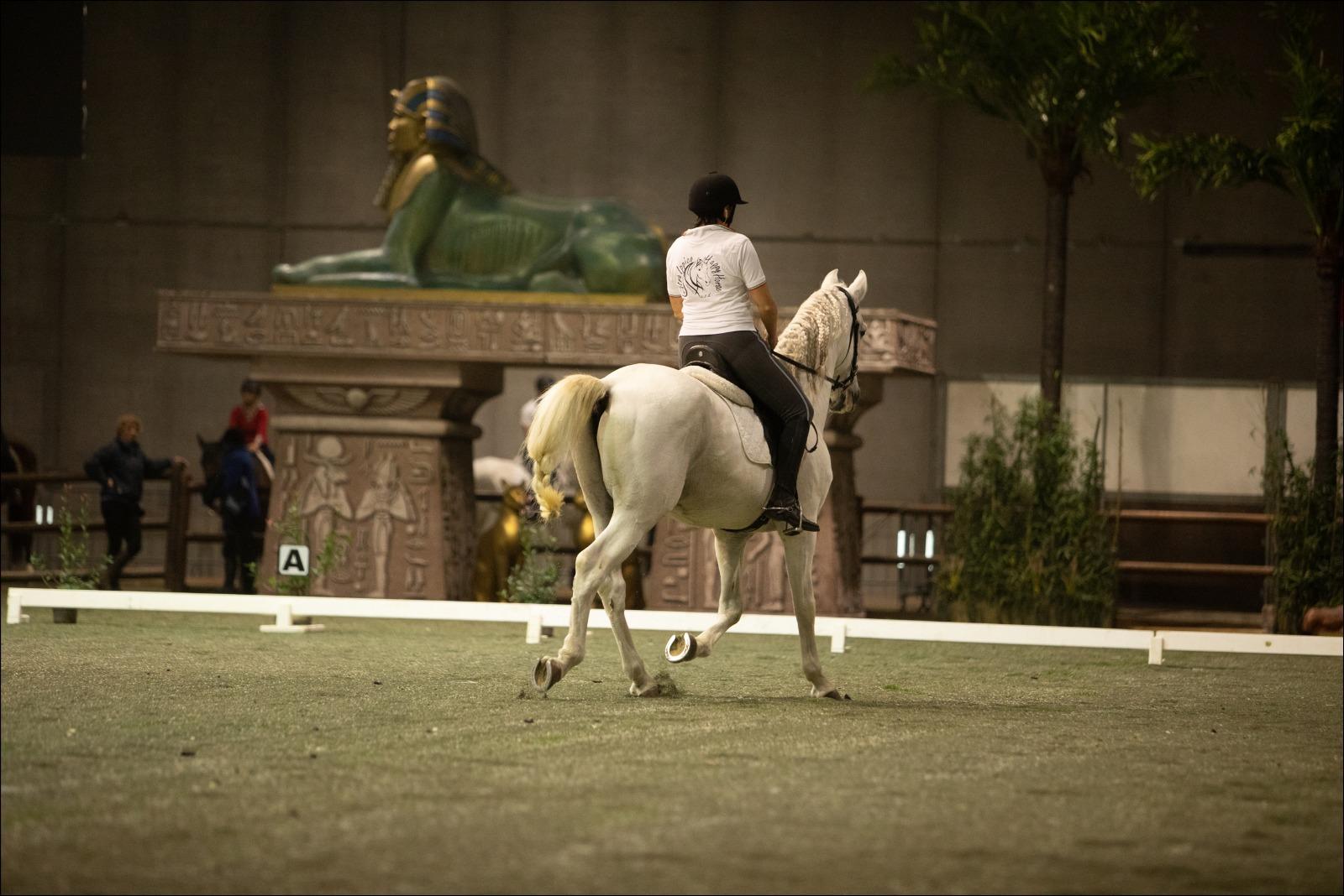 Arabian Horse Show Fieracavalli
